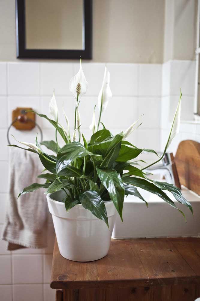 Banheiro decorado com vaso de lírio da paz.