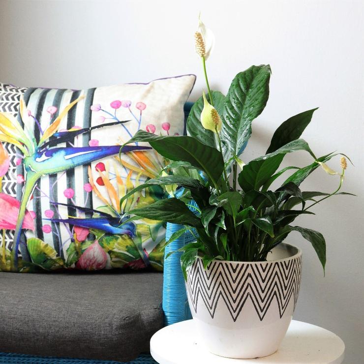 Sala decorada com sofá colorido.