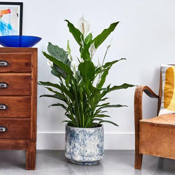 Sala decorada com vaso com planta.