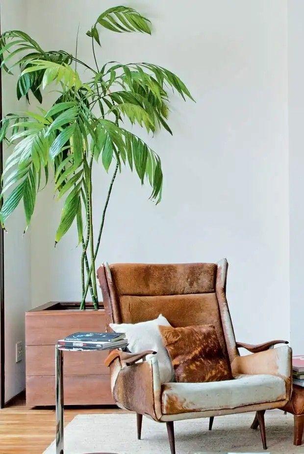 Plantas de sombra: camedorea-elegante.