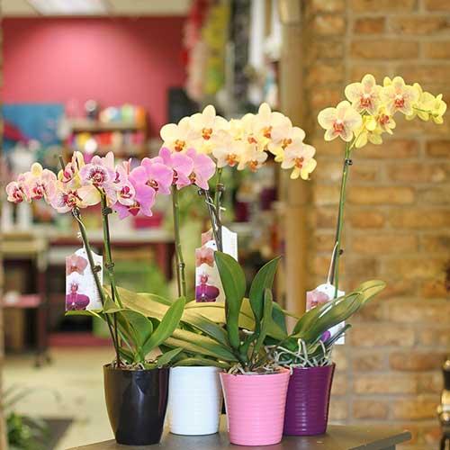 Diferentes tipos de de orquídeas.