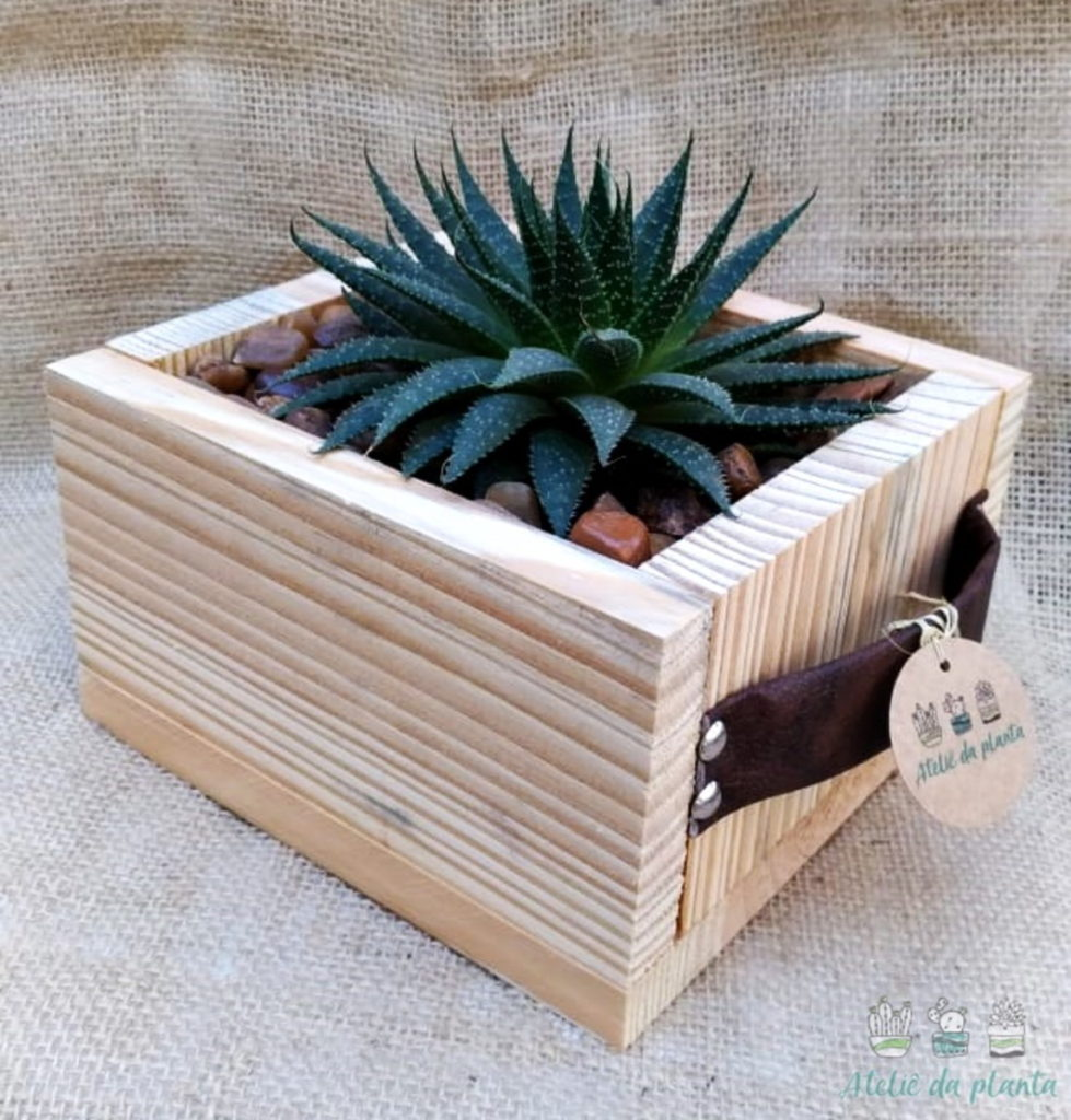 Caixa de madeira com Aloe aristata.