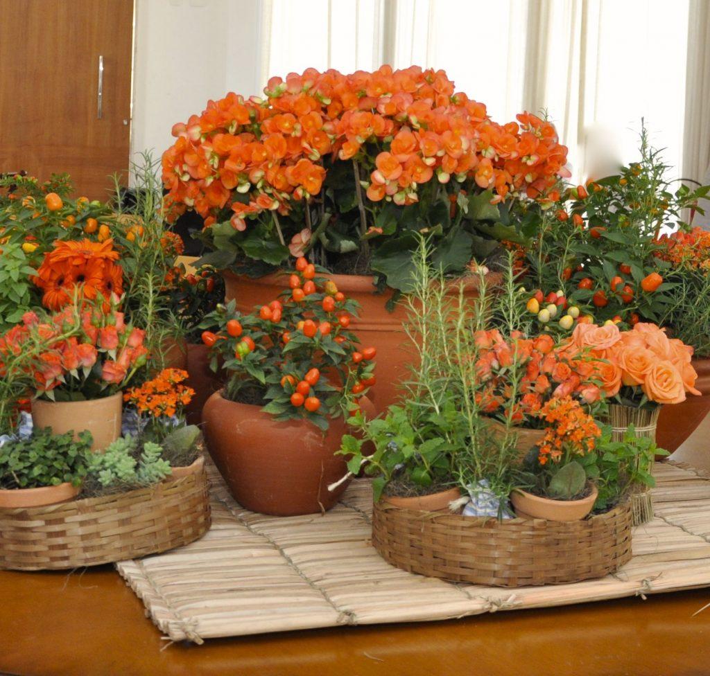 Arranjos com diferentes plantas.