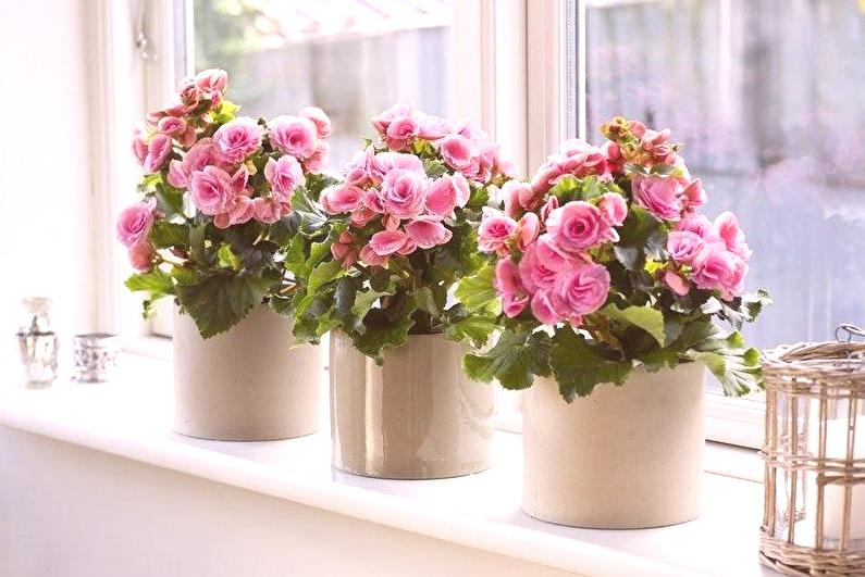 Vasos de begônias rosas.