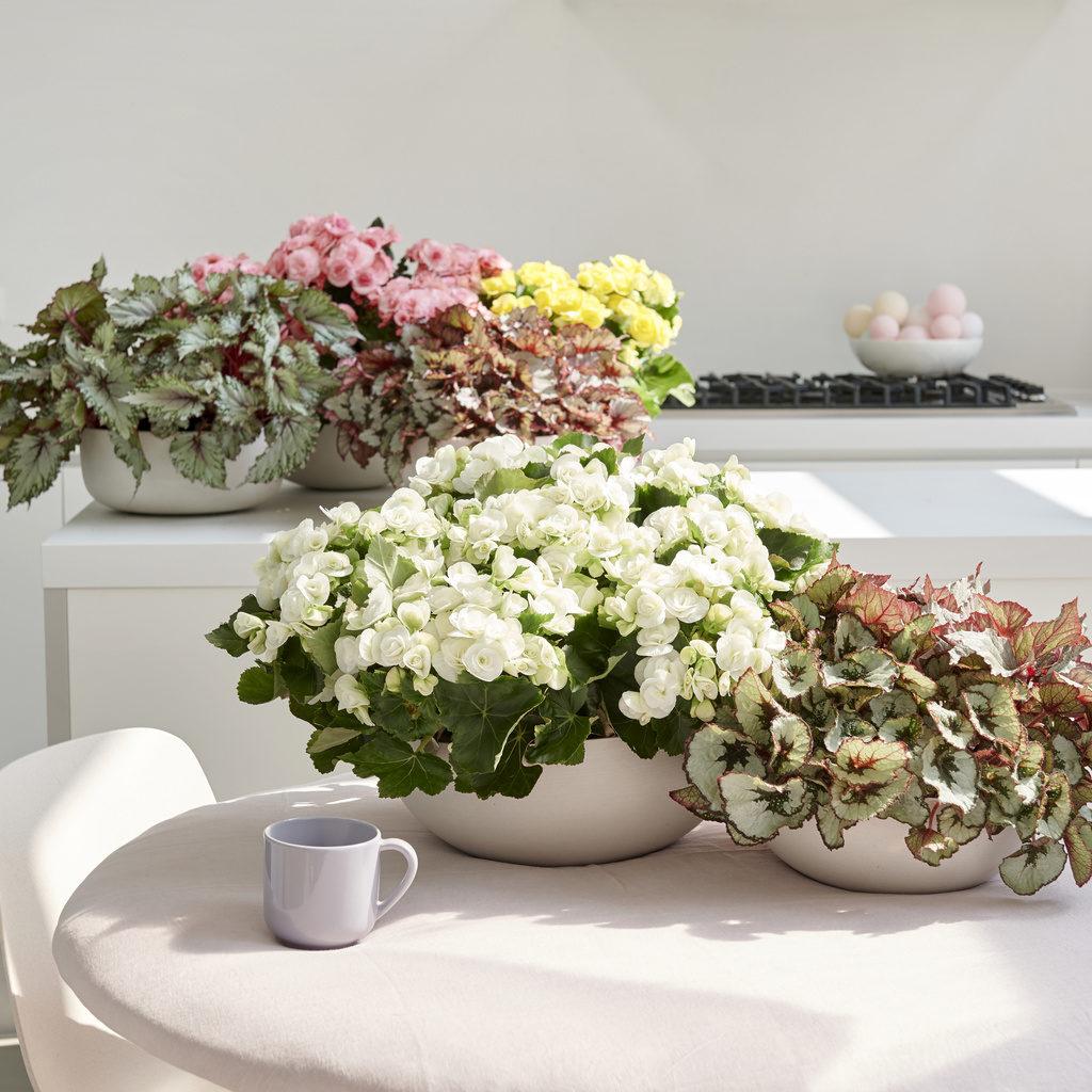Vasos de plantas no centro de mesa.