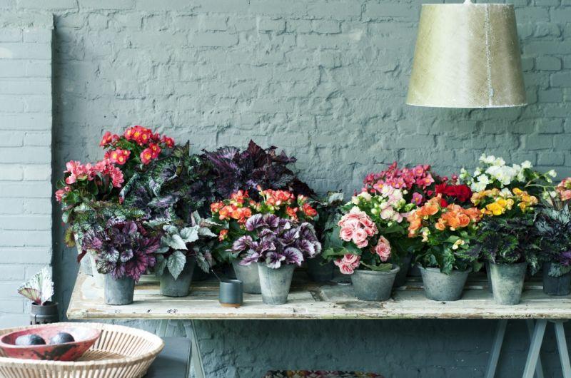 Diferentes vasos de plantas com flor.