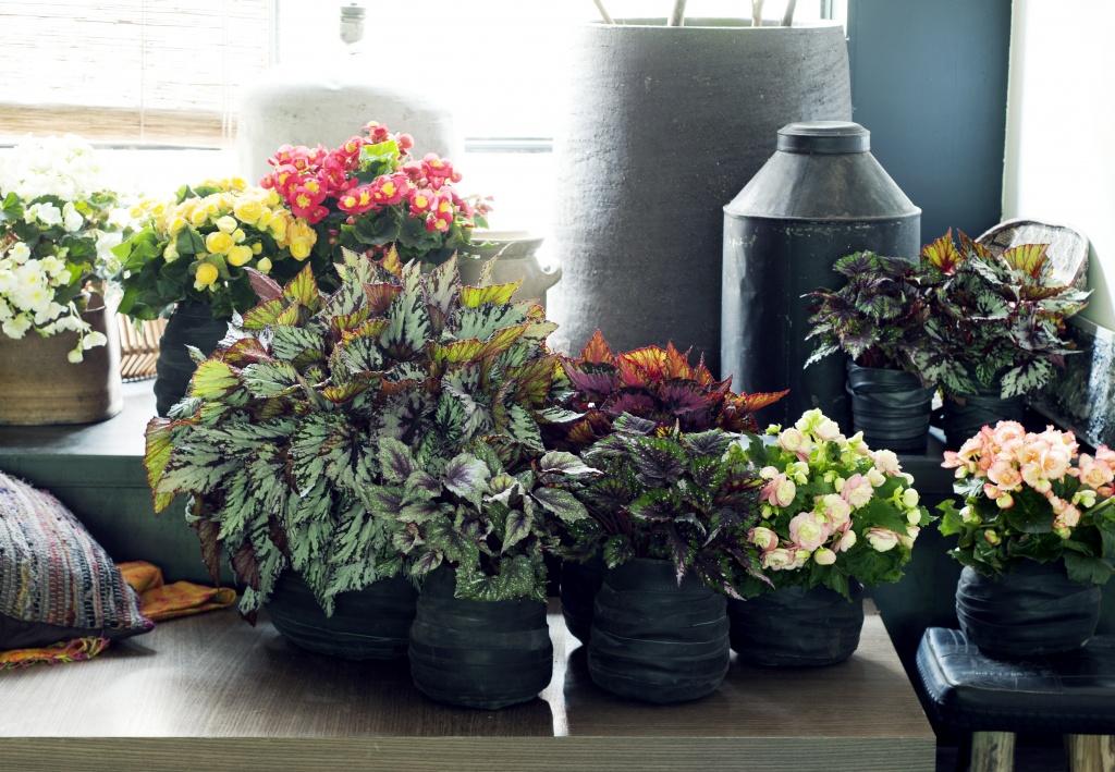 Vasos de plantas com flores.