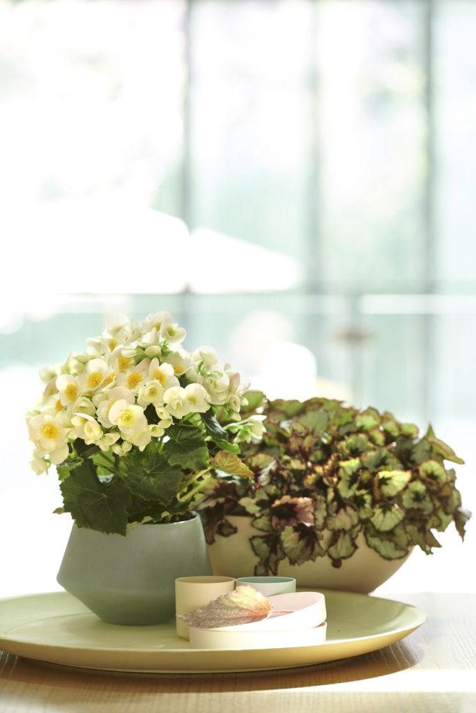 Vasos modernos com plantas no centro de mesa.