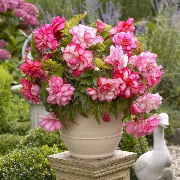 Vaso de planta em jardim luxuoso.