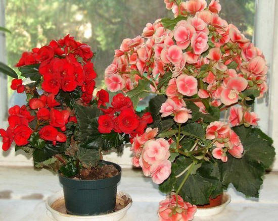 Vasos de plantas com flore.