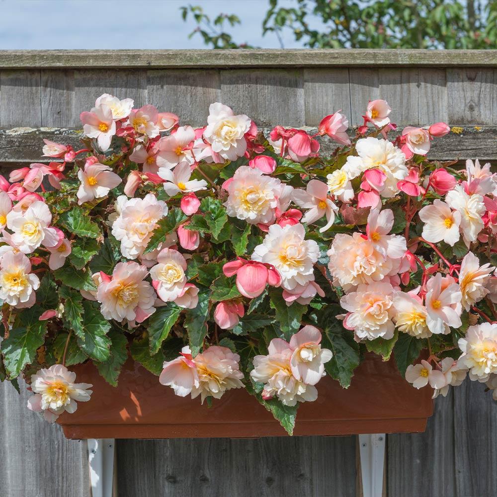 Jardineira suspensa com planta com flor.