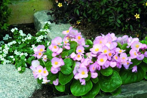 Jardim com plantas com flores.