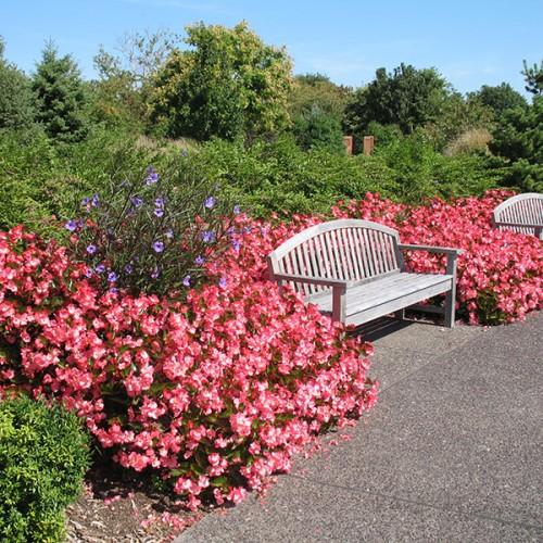Jardim com plantas com flor e banco.