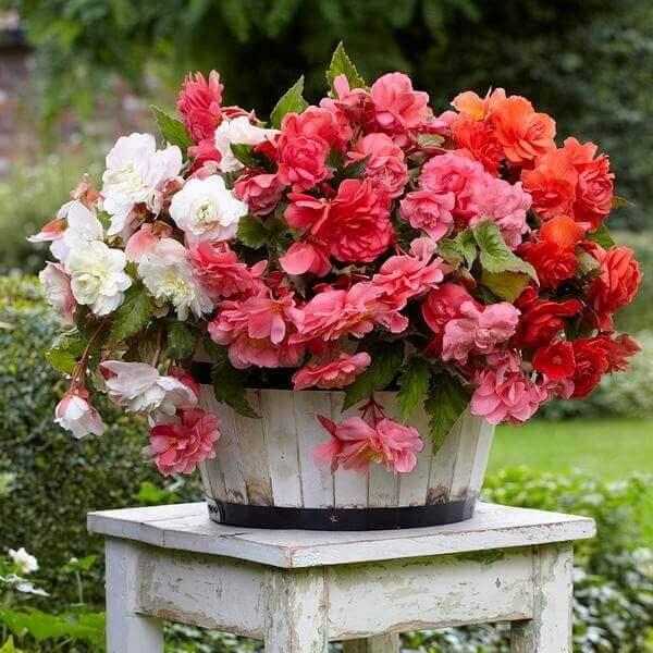 Vaso de madeira com plantas de cores diferentes.