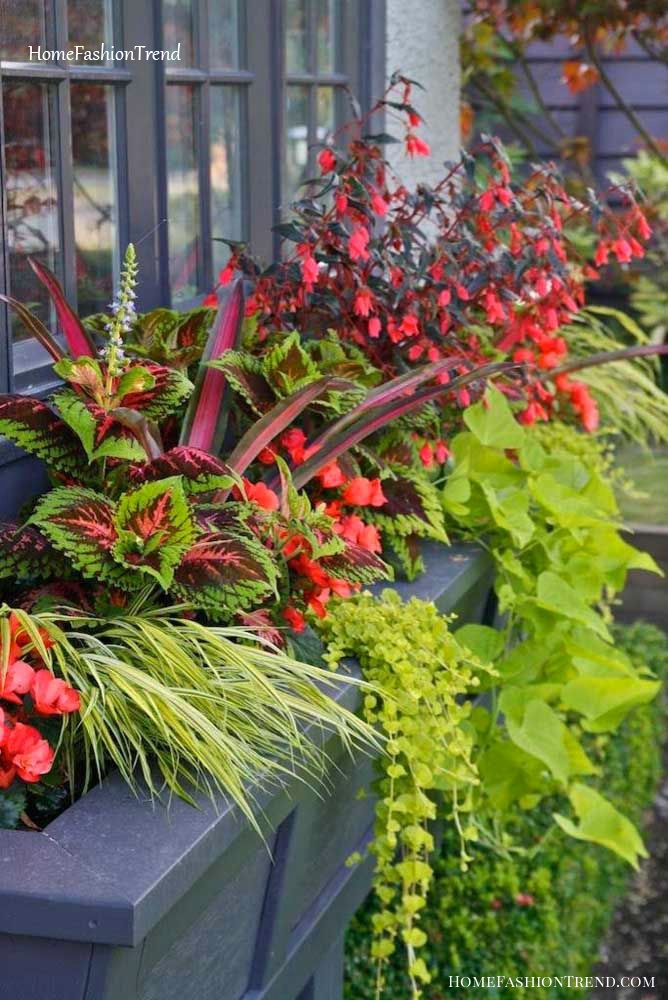 Jardineira com diferentes plantas com flores.