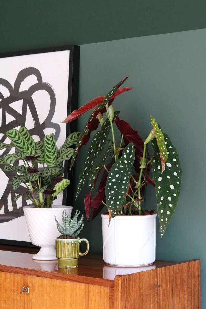 Vaso de cerâmica com plantas no aparador da casa.