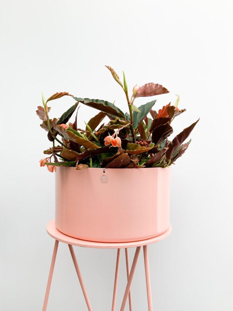Vaso rosa com planta com flor.