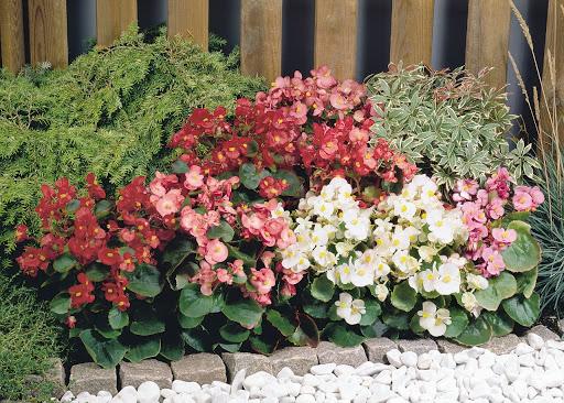 Canteiro com plantas com flores.