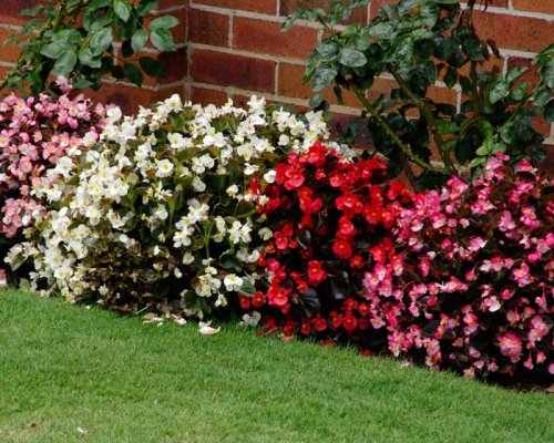 Arbustos com flores.