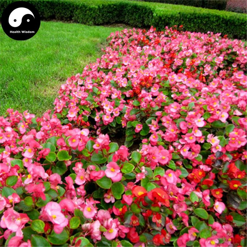 Arbustos com flores rosas e vermelhas.