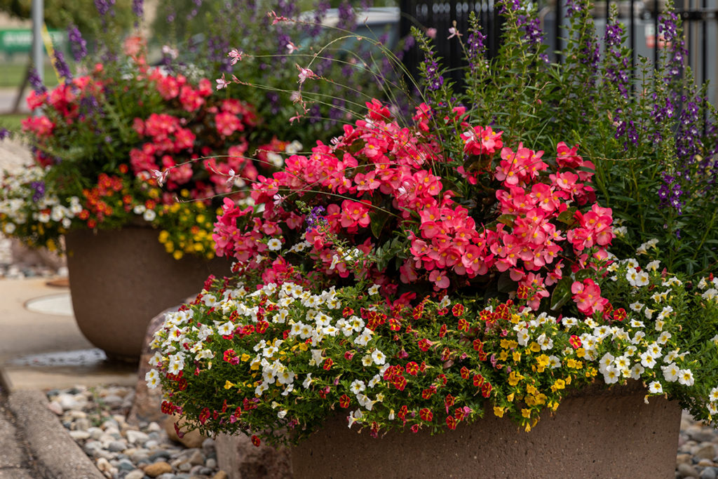 Vaso de cimento com plantas de flores.