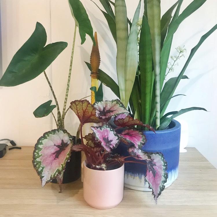 Vasos decorados e coloridos de plantas para a sala.