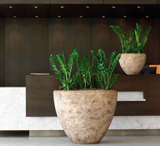 Hall de entrada com vasos de cimento com zamioculca.