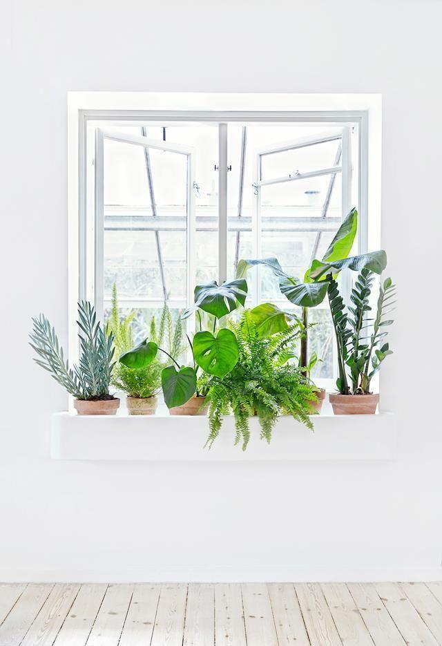Peitoral da janela com vários vasos de plantas.