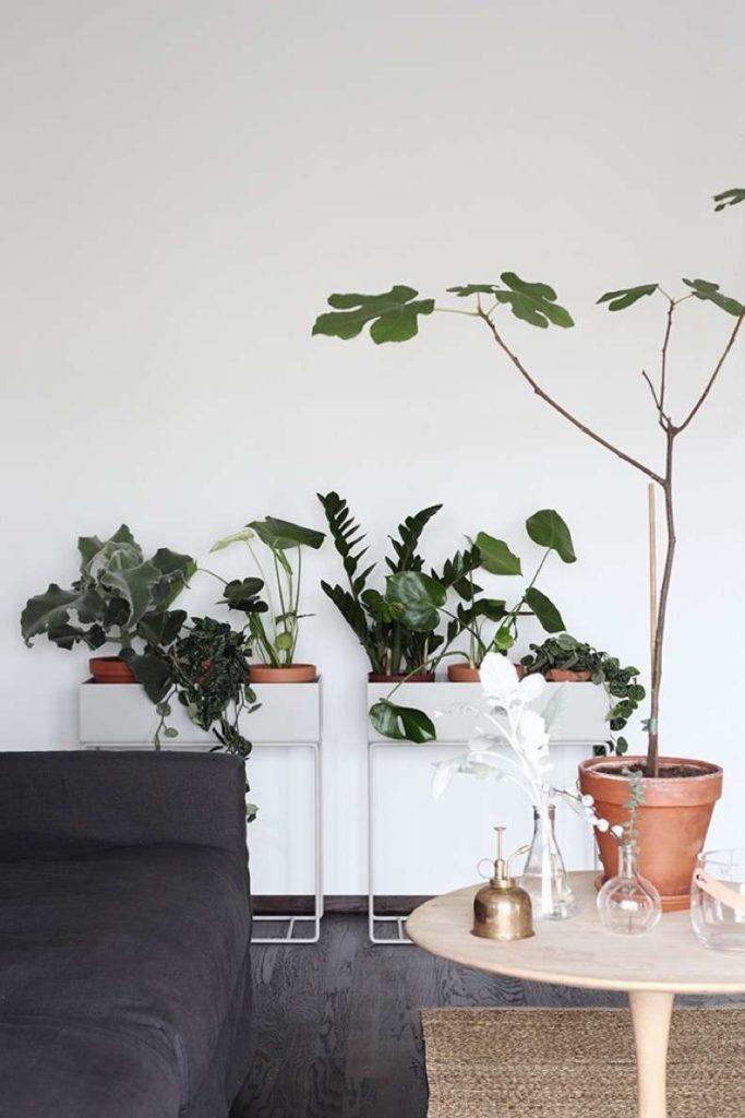Sala aconchegante com plantas.
