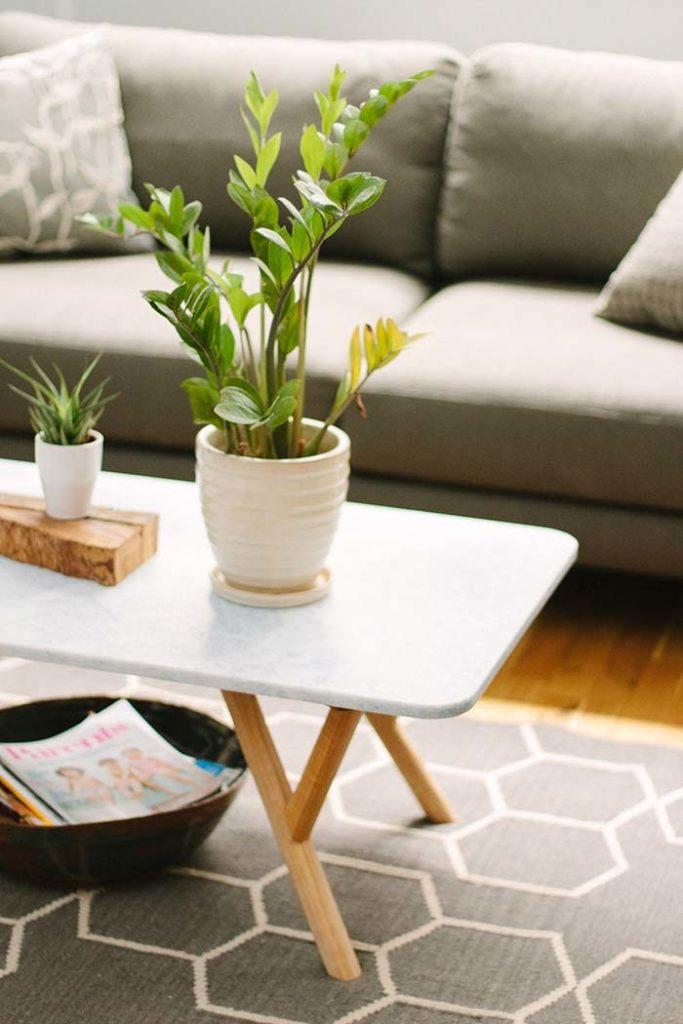 Mesa de centro decorado com vaso de zamioculca.
