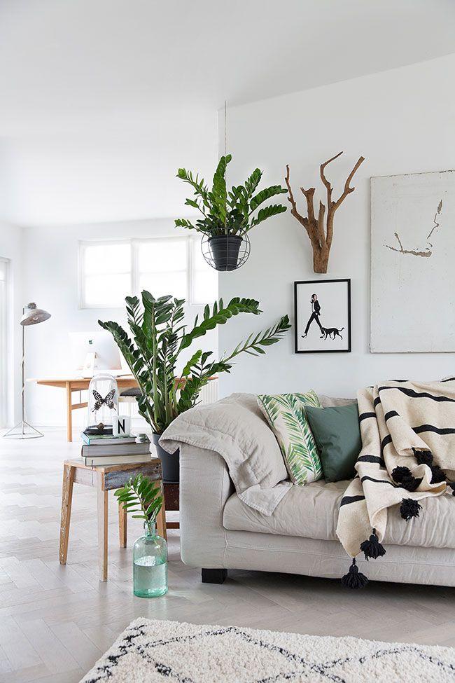 Sala com decoração escandinava e vasos de zamioculca.