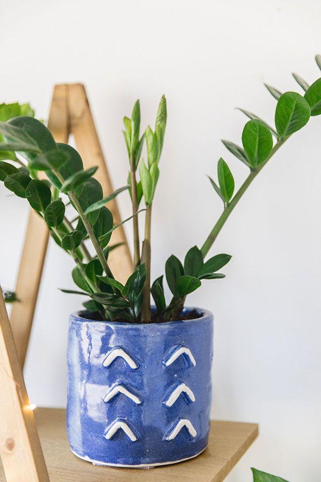 Vaso de cerâmica azul com zamioculca.