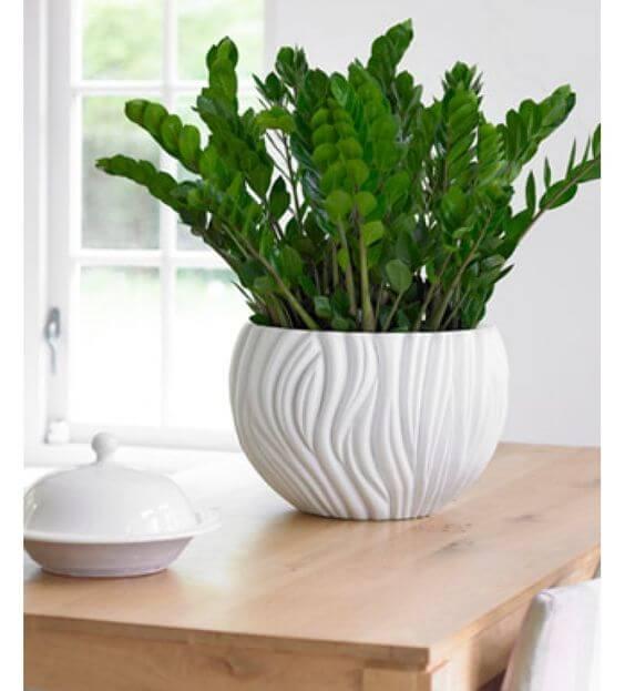 Vaso de cerâmica decorada com zamioculca.
