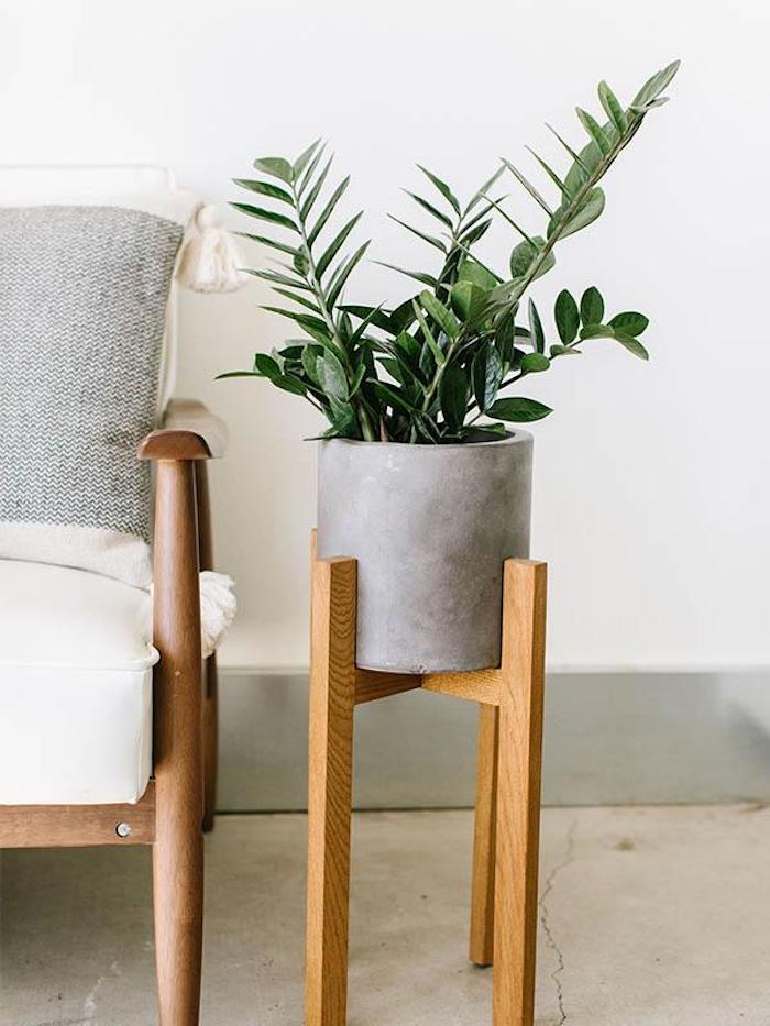 Vaso de cimento moderno com zamioculca.