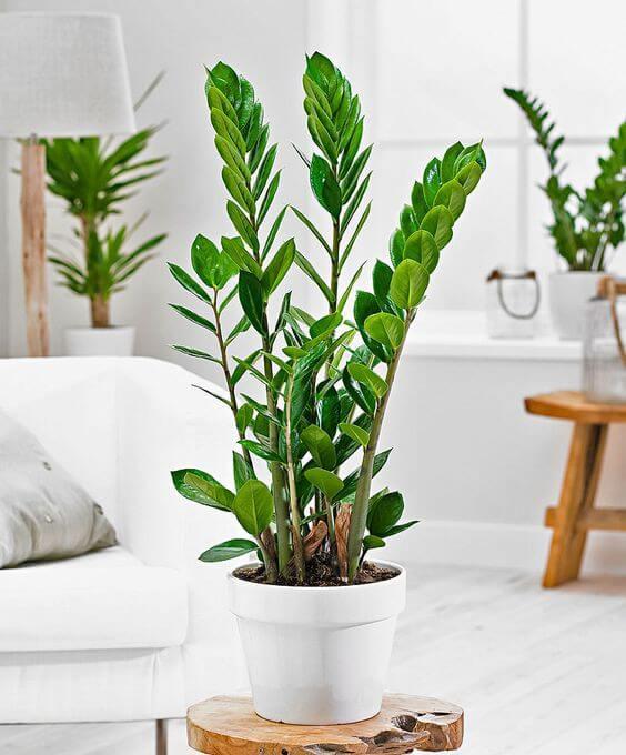 Sala minimalista com plantas.