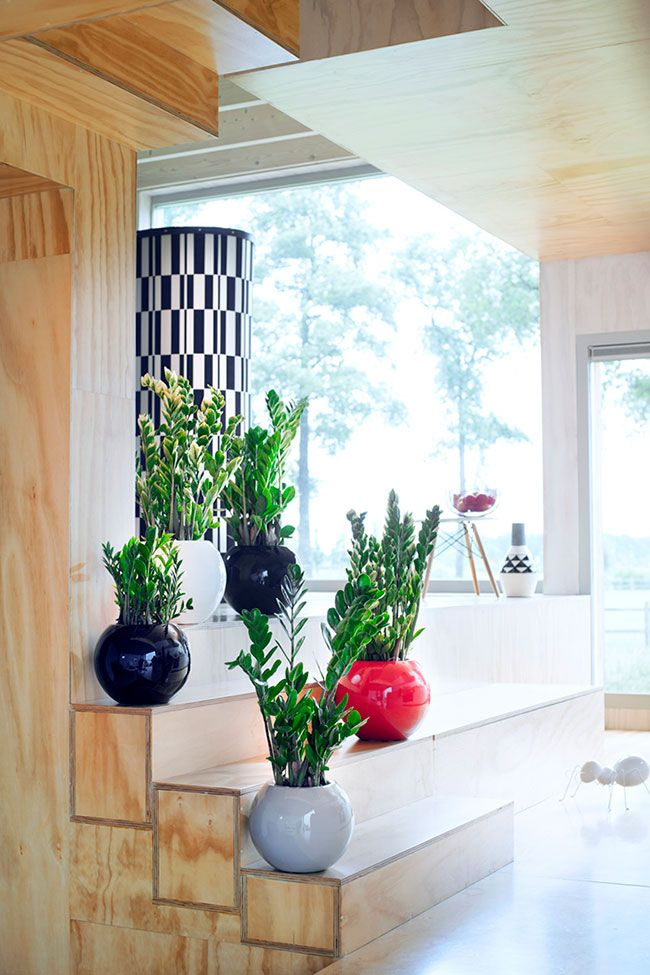 Escada de madeira com vasos de plantas.