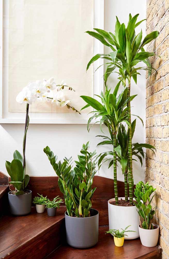 Escada decorada com vasos de plantas.