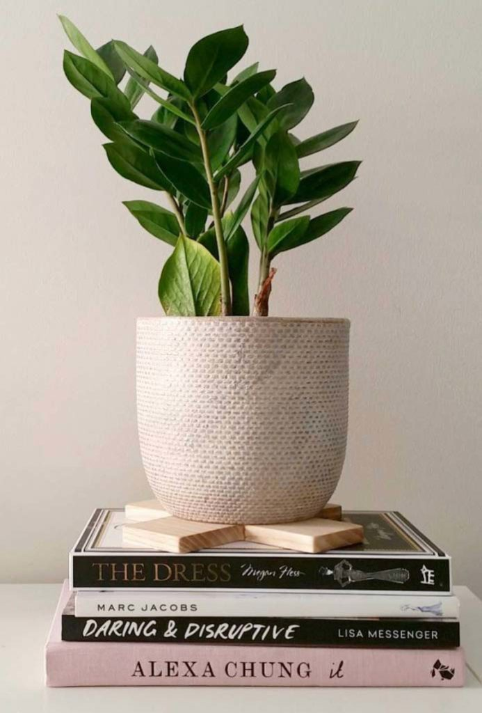 Vaso de plantas e livros decorando a mesa.