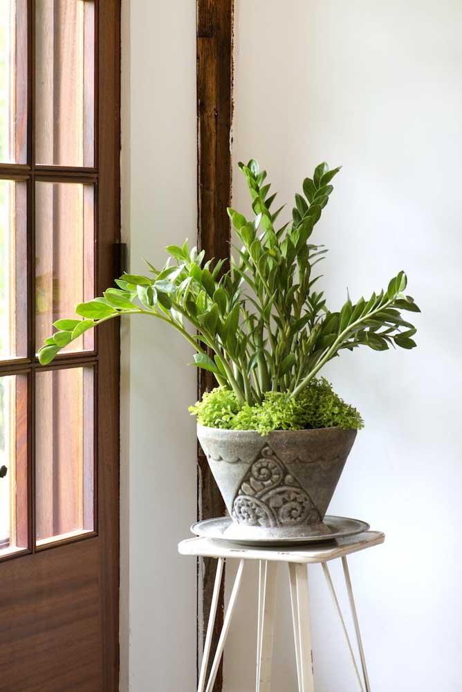 Vaso de cimento com plantas.