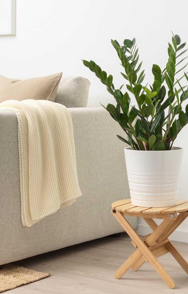 Sala simples clean com vaso de planta.