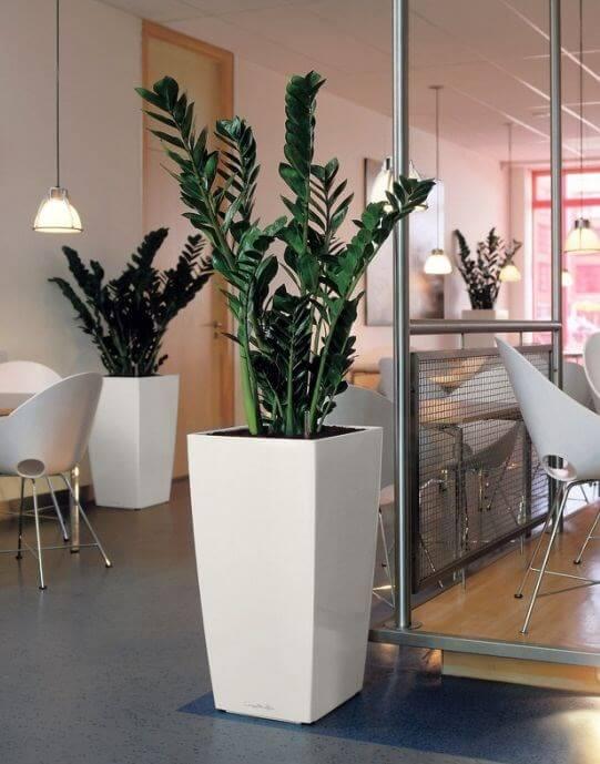 Ambiente decorado com vasos modernos e brancos com zamioculcas.