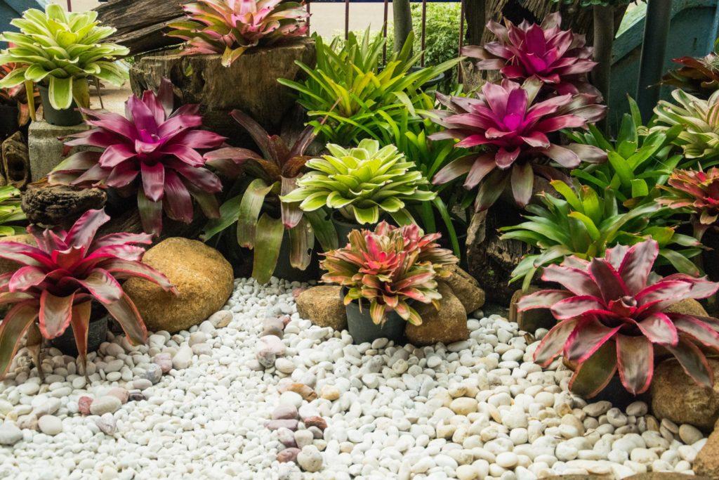 Jardim de bromélia com pedras.