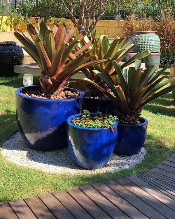 Vasos azuis com bromélia imperial e outras plantas.
