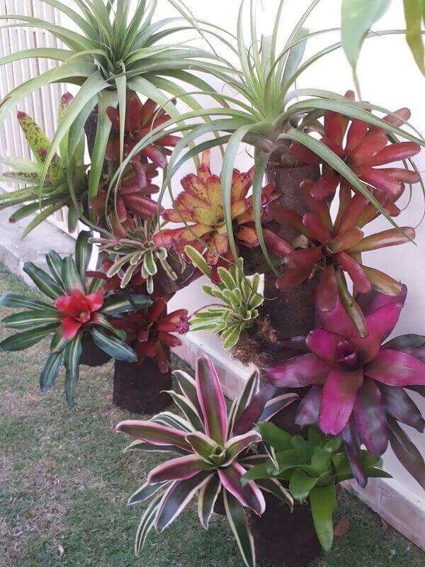 Bromélias com palmeiras.