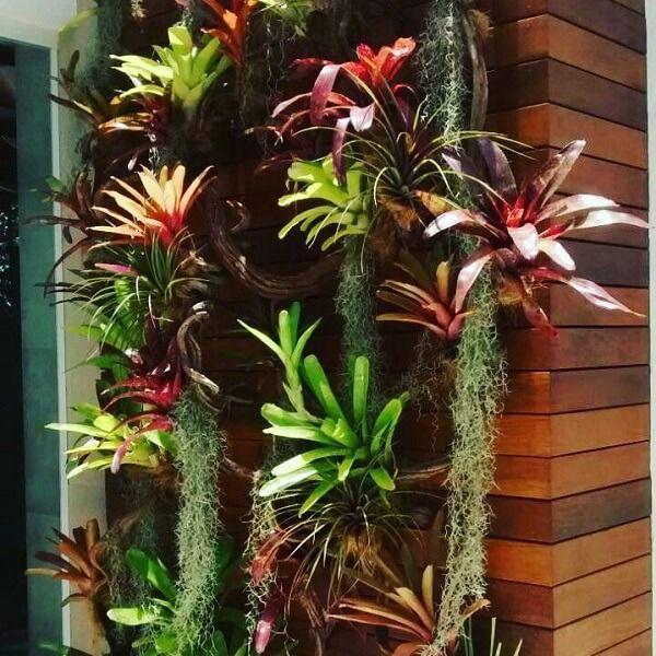 Jardim vertical com bromélias.