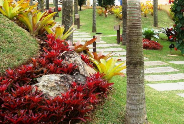 Jardim externo com bromélias porto seguro.