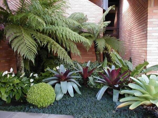 Jardim de inverno com bromélias e lírio da paz.