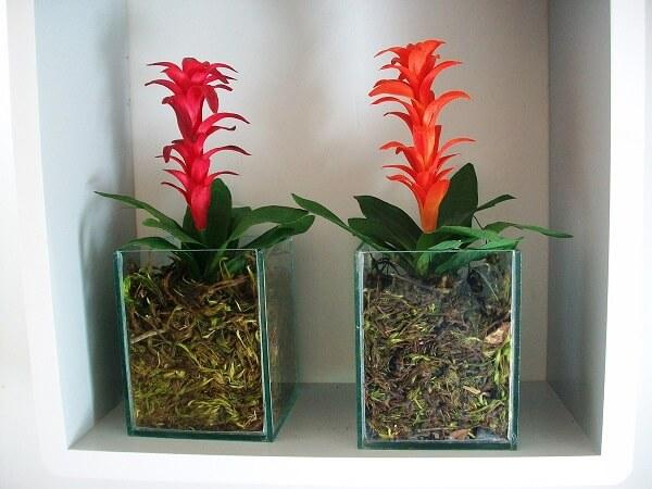 Vasos de vidro com bromélias pequenas