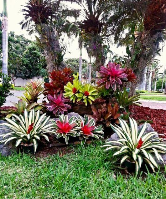 Jardim com bromélias coloridas.