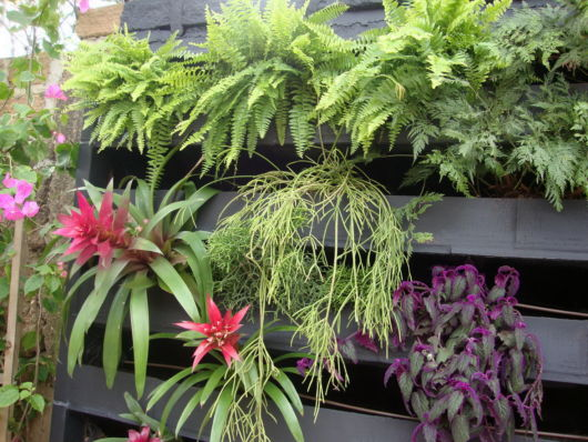Jardim vertical com madeira e diferentes plantas.